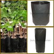 Пакеты для саженцев Выращивание растений Выращивание хвойных